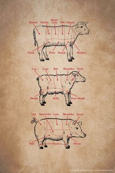 Primal Cuts - Kitchen 101 Meat Cuts at Chasing Delicious. slightly barbaric but if u like steak or eat meat u should at least know the different cuts Cooking 101, Cooking Recipes, Cooking Photos, Cooking Time, Meat Recipes, Le Chef, Food Facts, Baking Tips, Baking Ideas