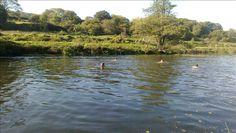 River Avon, near Claverton, UK English Village, Bristol, Farmer, Avon, Swimming, River, Day, Outdoor, Popular