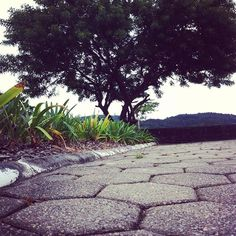 Perspectiva... #uminstantemichele #floripaemfoto #SantoAntonioDeLisboa #MBA