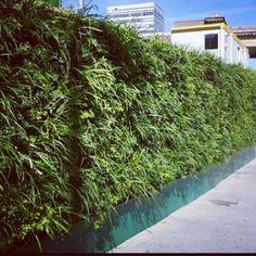 Reusable living green hoarding