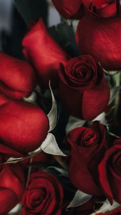 Flowers wallpapers full hd, hdtv, fhd, desktop backgrounds hd, pictures and images Rose Wallpaper, Nature Wallpaper, Wallpaper Backgrounds, Iphone Wallpaper, Beautiful Roses, Beautiful Flowers, Red Aesthetic, My Flower, Cute Wallpapers