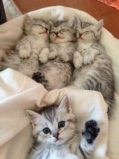 """Awww, kitty waving his paw saying""""nighty night everyone""""❣"""