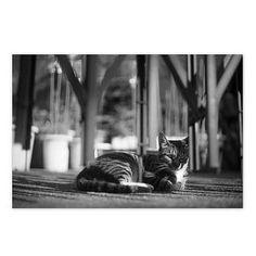 Cat August 2014 #cat #smallcats #blackandwhitephotography | by banjocamera