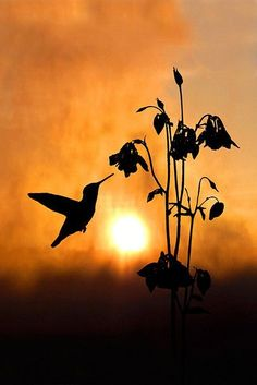 Sunset Shilouette