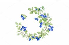 Blueberry wreath. Watercolor. by Svetlana Bakaldina on Creative Market