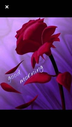 Good Morning Wishes Images Wallpaper Pics Websites Good Morning New Photo, Good Morning Beautiful Pictures, Latest Good Morning Images, Good Morning Roses, Good Morning Happy, Good Morning Messages, Morning Wish, Gd Morning, Morning Flowers