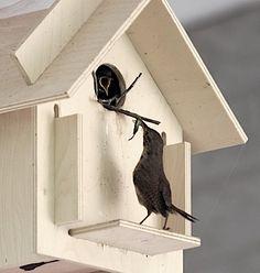 Box For the Birds Birdhouse Kit #fågelholk