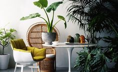 Image result for jungle inspired interiors