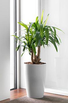 Decouvrez ce Vase Pot Design Evasé Haut SANTORINI 26 cm H40 cm Blanc au meilleur prix ! - LeKingStore