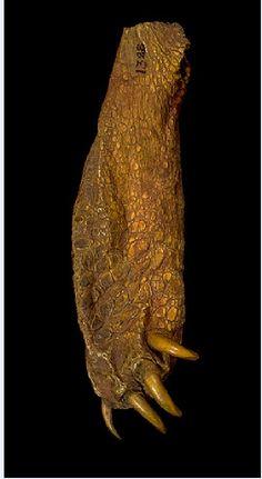 Cheyenne turtle foot bag.  Yale Peabody  ac
