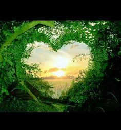 Green Nature Love Wallpaper : Check out the cool latest Green Nature images. High Definition desktop wallpapers to make your desktop cool G. Heart In Nature, Heart Art, Love Heart, Nature Nature, Green Nature, Nature Study, Happy Heart, Nature Quotes, Love Wallpaper