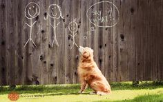 1st baby pregnancy announcement photography... Would be so cute with Bently someday!