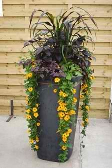 Tall and Slender - dramatic container plantings add a splash of autumn color