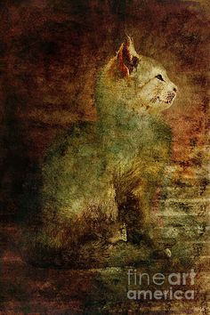 Title  Stray Cat In Red And Green   Artist  Alice Van der Sluis   Medium  Photograph - Photography, Photography Based Digital Art