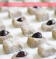 homemade dog treats - you can add a blueberry on top.  A lot of the comments mentioned molding quickly.  I kept mine in the freezer and would move a few to the fridge as needed.  With three large dogs who LOVE homemade treats, I don't think they lasted long enough to mold.  I liked the idea of using honey to prevent mold, though.