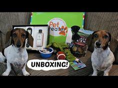 PET TREATER UNBOXING! - YouTube