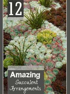 12 Amazing Succulent Arrangements- Beautiful landscape and gardening tips for using succulents in your yard.