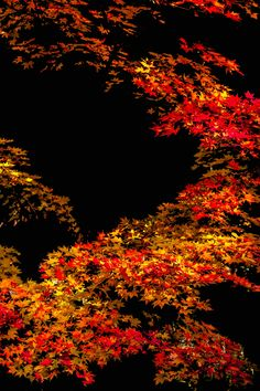 Autumn leaves by Tomoaki Kabe on 500px