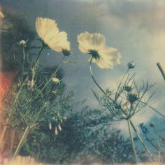 flower, landscape, nature, summer