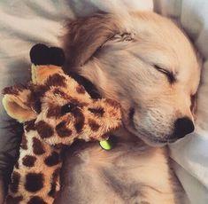 Super Cute Puppies, Baby Animals Super Cute, Cute Baby Dogs, Cute Little Puppies, Cute Dogs And Puppies, Cute Little Animals, Cute Funny Animals, Doggies, Pics Of Cute Dogs