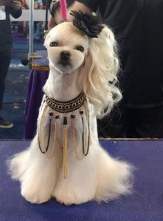 Ideas Dogs Grooming Styles Shih Tzu For 2020 Cute Baby Dogs, Cute Dogs And Puppies, Pet Dogs, Pets, Pet Puppy, Dog Grooming Styles, Pet Grooming, Cute Funny Animals, Cute Baby Animals