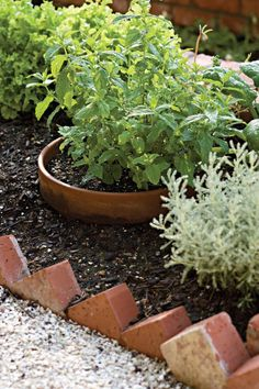72 Beautiful Container Gardening Ideas Will Inspire You
