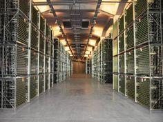 Con la ampliación de la bodega se consiguieron cerca de 5.000 metros cuadrados destinados a botelleros. Gracias a las nuevas tecnologías, todos ellos se controlan por ordenador, lo que permite conocer a cada momento parámetros como el ph, acidez o el grado alcohólico. Ph, World, Furniture, Home Decor, Square Meter, Wine Rack, Future Gadgets, Squares, Wine