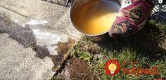 Sezóna mravcov je tu: Pripravte im pascu, do ktorej sa budú sami ponáhľať a roznesú ju aj medzi kamarátov!