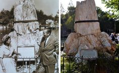 Disneyland, Then and Now. L: Walt Disney in front of the remains of a petrified tree that once stood in Pike Forest Fossil Beds, CO. The tree is believed to be between 55 million and 70 million years old, and was placed in Disneyland in 1957. R: When you're several million years old, what's a few decades here and there?