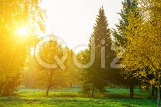 Qdiz Stock Photos | Autumn Scenery of Colorful Trees and Bright Sun,  #autumn #background #beautiful #beauty #blue #branch #cloud #colorful #day #environment #field #foliage #golden #grass #green #idyllic #land #landscape #lawn #leaf #leaves #meadow #morning #multicolored #nature #nobody #orange #outdoors #park #plant #scenery #scenic #season #sky #Sun #sunlight #sunny #tranquil #tree #view #weather #wood #yellow