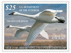 The 2016-17 Federal Duck Stamp features art by 5-time Federal Duck Stamp Contest winner Joseph Hautman of Plymouth, MN. Buy yours now and support wildlife and habitat conservation! Federal Duck Stamps are conservation revenue stamps; 98% of the purchase price goes directly to help acquire and protect wetland habitat and purchase conservation easements for the National Wildlife Refuge System.