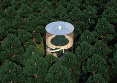 En images : une étonnante maison de verre à bâtir autour d'un arbre