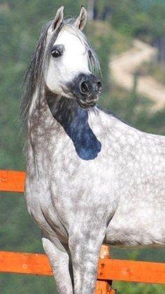 ~Beautiful Arabian~