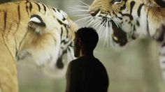 WWF and Will Young 'What the world needs now is love'