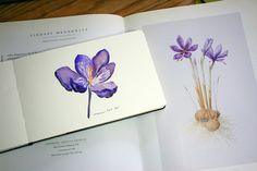 Watercolor sketch of a crocus inspired by an autumn crocus called Saffron: Crocus Sativus by Lindsay Megarrity, from the book Contemporary Botanical Artists: The Shirley Sherwood Collection