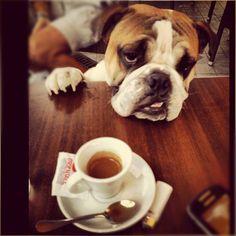 #italiancoffeesecret #piaschenk @Igers_Napoli @domenico_86 : Puppy love e Espresso:  È talmente buono che lo gradisce chiunque anche gli animali