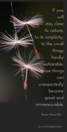 """""""If you will stay close to nature, to its simplicity, to the small things hardly noticeable, those things can unexpectedly become great and immeasurable."""" Rainer Maria Rilke quote #simplelife #simplicity #smallthings #astrology #virgo #naturequote #closetonature #naturequotes #seeds #tiny #air"""