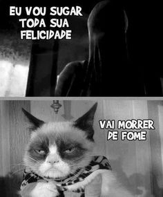 Olha o mau humor, minha gente... Funny Photos, Funny Images, Avakin Life, Lol, Funny As Hell, Harry Potter Memes, Love Pet, Grumpy Cat, Cat Memes
