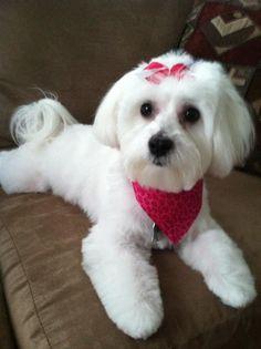 Sadie - after her grooming