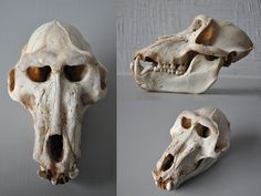 Male Chacma Baboon Skull Study by *Maxidermy on deviantART
