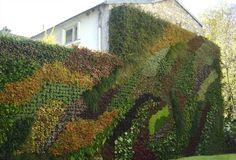 Muro vegetal de exterior