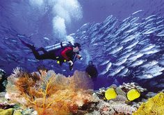 Bucea y admira los increíbles paisajes que se manifiestan bajo el encantador manto cristalino del Pacífico alrededor  de las Islas Marietas, México.