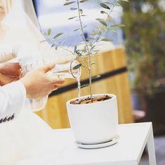 ゲスト参加型で木を植える結婚式演出「植樹の儀」とは | marry[マリー]
