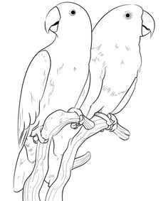 Pet Bird, Parrot, Finch & Canary Coloring Pages