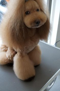 japaneses grooming - Google Search