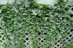 The 10 Best Garden Crops to Plant This Summer  http://www.rodalesorganiclife.com/wellbeing/summer-vertical-gardening