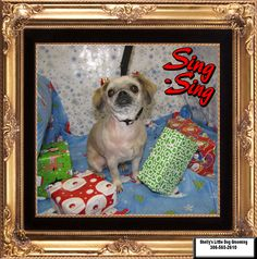 Professional Dog Grooming for little dogs Sing Sing, Small Breed, Little Dogs, Dog Grooming, Shih Tzu, Own Home, Pugs, Your Dog, Little Puppies