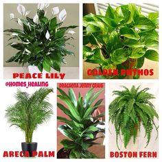 نباتات تعمل على تنقية وتنظيف الجو داخل المنزل ومكتب العمل هذه اسماء خمس نباتات لها خاصية تنقية الجو الداخلي في المكان من التلوثات الناتجة من...