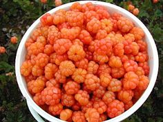 cloudberries...one of the best things that i tasted in finland