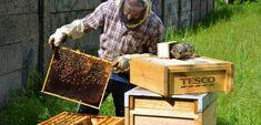 Bez včiel by chýbalo ovocie a zelenina, ale aj koreniny a oleje. Ako chrániť opeľovače? - Akčné ženy Ale, Home Decor, Decoration Home, Room Decor, Ale Beer, Home Interior Design, Ales, Home Decoration, Interior Design